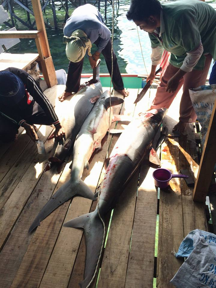 Shark catch in fishing boat.
